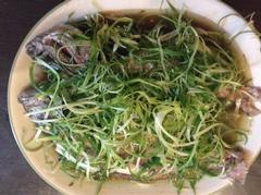 Snapper with sllice green onion